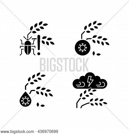 Crop Loss Reasons Black Glyph Icons Set On White Space. Pests Danger. Crop Diseases. Unsafe Water. A