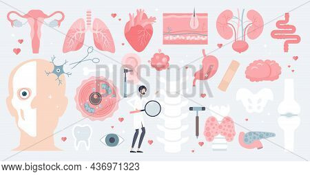 Human Anatomy And Isolated Medical Organs In Tiny Person Collection Set. Elements With Inner Parts F