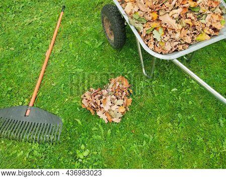 Raking Fall Leaves In Garden. Wheelbarrow Full Of Dried Leaves. Autumn Leaf Cleaning. Heart Shaped P