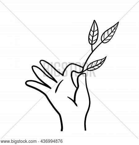 Hand With Branch With Leaves. Fresh Plant In Palm. Concept Of Freshness And Naturalness. Doodle Sket