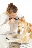 Veterinary consultation conducting a review on the ears of a dog poster