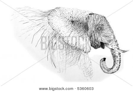 Pen Drawing Of An African Elephant