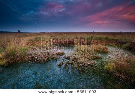 Dramatic Sunset Over Wild Bog