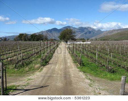Dirt Road And Mountain