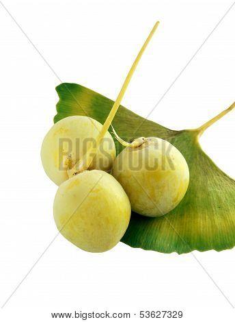 fruits and leaf of ginkgo biloba tree