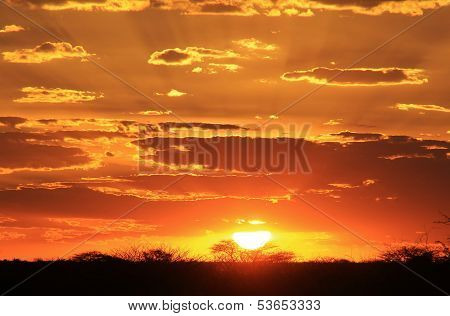 Sunset Background of Gold - African Magic