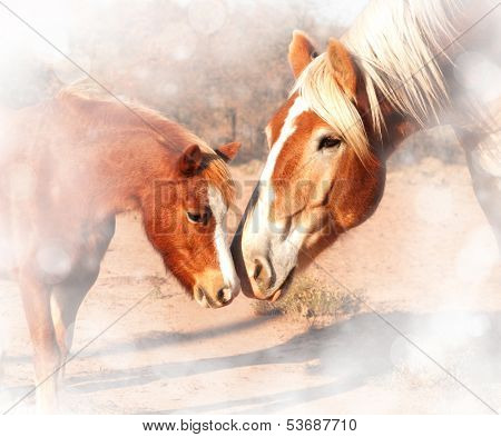 Sweet, dreamy image of a small pony and a huge draft horse sniffing noses; friendship without limits
