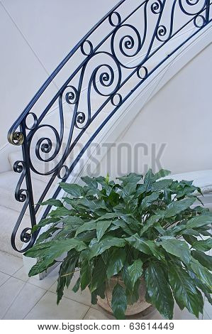 Pretty Modern Interior Staircase And Plant