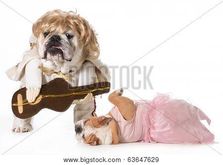 english bulldog wearing rock star costume with fan fainting at his feet