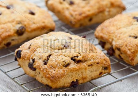 Homemade English Scones