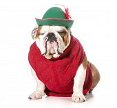 funny dog wearing red sweater and green hat poster