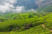 Kerala India travel background - green tea plantations in Munnar, Kerala, India - tourist attraction poster