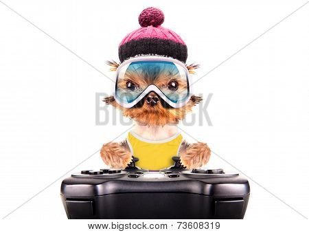 poster of dog  dressed as skier play on game pad isolated