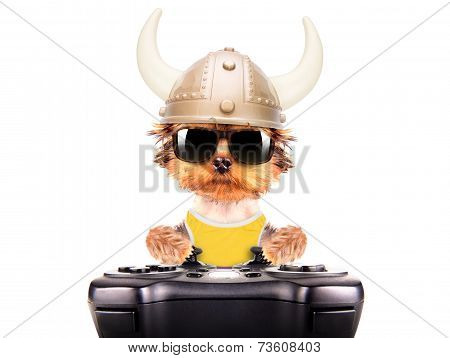 dog dressed up as a viking play on game pad isolated poster
