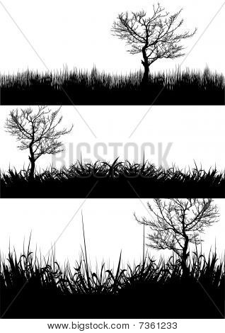 Grass trees silhouette