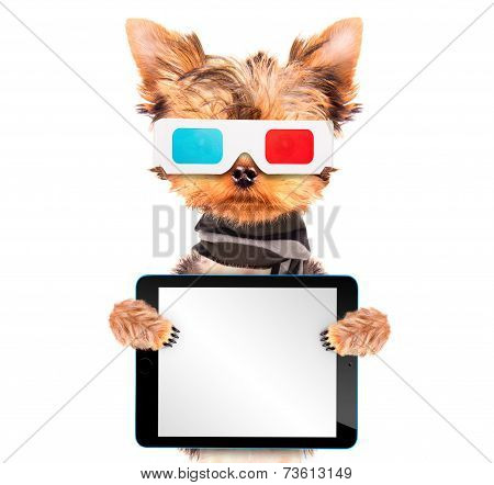 dog going to the movies isolated and holding a blank tablet pc poster