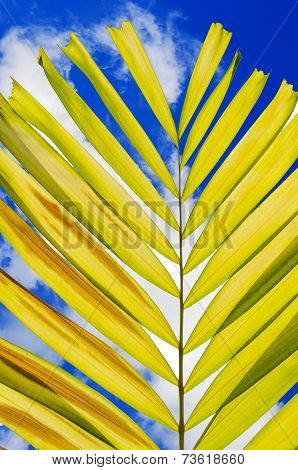 Petal Palm Leaf And Cloudy Blue Sky Background