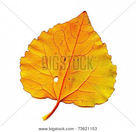 Autumn Leaf Close-up