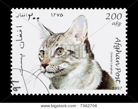 AFGHANISTAN - CIRCA 1997: Afghan mail stamp featuring an Oriental Longhair cat poster