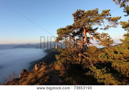 Pine Tree On Peak And Fog