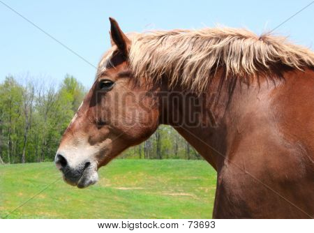 Horse Porfile