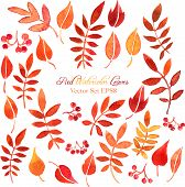 vector set of red autumn watercolor leaves and berries, hand drawn design elements poster