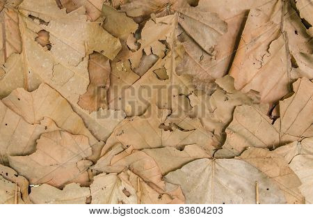 Brown Dry Leaves For Background