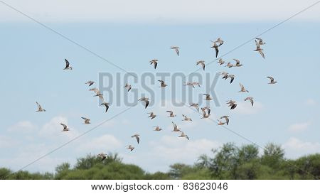 A Flock Of Birds In The Air