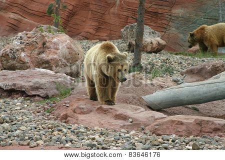 Griz And Mama Bear