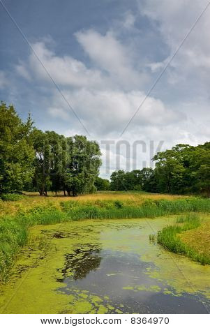 calm river in forest at summer daytime poster