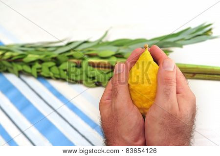 The Four Species - three types of branches and one type of fruit which are held together and waved in a special ceremony during the Jewish holiday of Sukkot. The waving of the Four Species is a mitzvah prescribed by the Torah and contains symbolic allusio poster