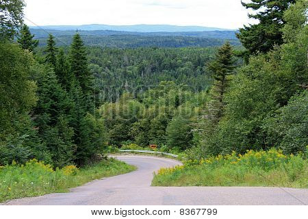 Trees And Winding Road