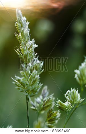 Green, Grass, Leaves, Flovers