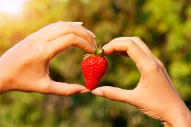 Strawberry In Heart Shape Woman's Hands On The Trees Background