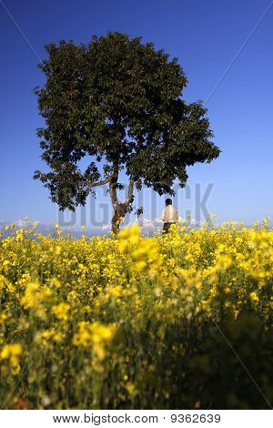A man standing alone in a yellow field looking at the Annapurna Range. poster