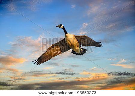 Flying Goose Sunset