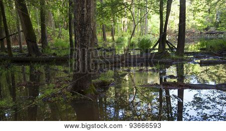 Flooded Timber