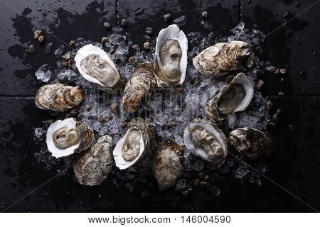 Fresh Oysters with ice on black stone
