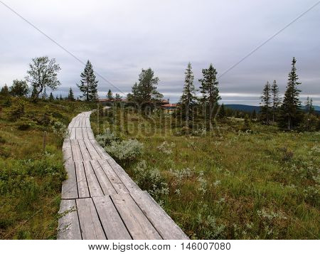 Hiking plank path in Lapland national park