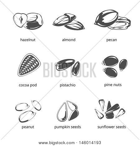 Seeds and nuts monochrome vector icons. Healthy food, hazelnut and sunflower seeds illustration