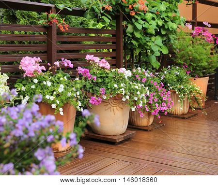 Fresh flowers in clay pots on wooden summer terrace