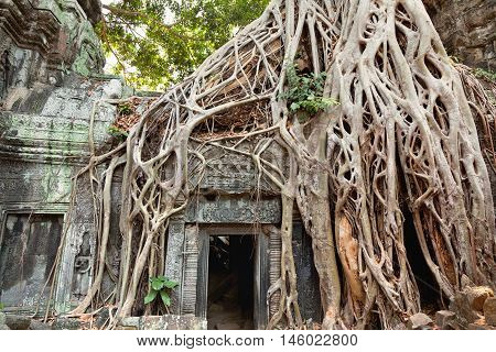 Entrance of Ta Prohm temple covered in tree roots Angkor Wat Cambodia. Horizontal view