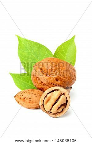 Walnuts and almonds isolated on white background closeup.