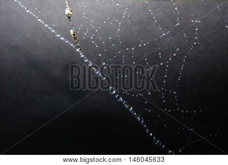 Spider web highlighted with raindrops against dark background.