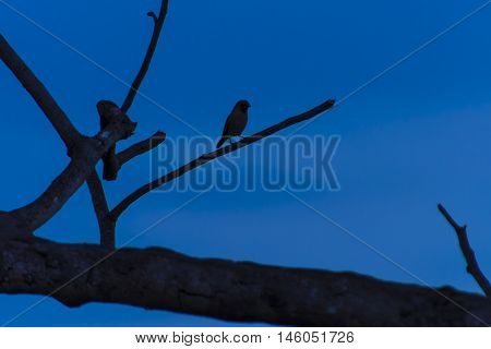 Abstract scene of bird on die tree, blackground clear blue sky