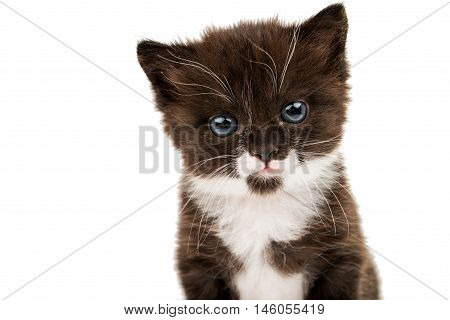 little cute kitten on a white background