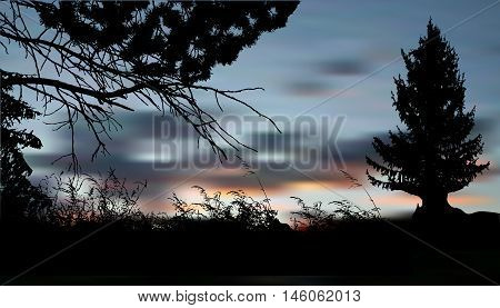 Nostalgic autumn landscape with silhouettes of trees, plants and clouds. Dark landscape with spruce, branches and grass
