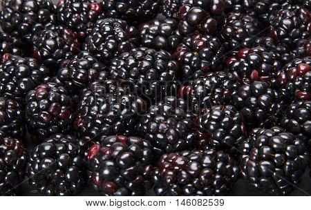 Lots of blackberries texture that can be used as background