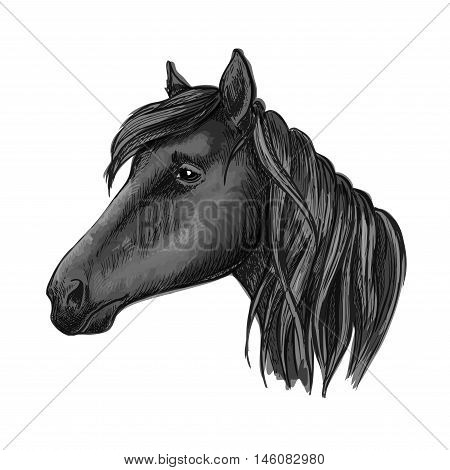 Black riding horse sketch with head of purebred arabian mare horse. For equestrian sporting competition, horse racing or t-shirt print design