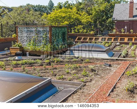 Rooftop garden in urban setting under blue sky